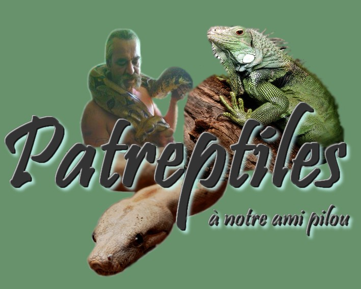 patreptiles