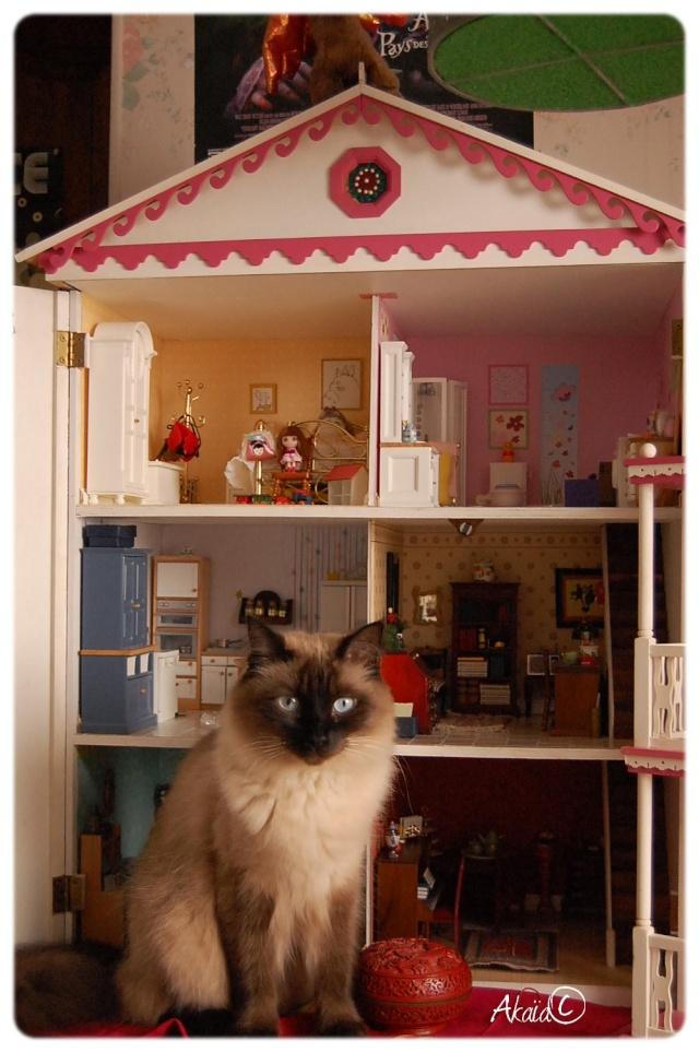 Le Manoir (dollhouse 1/12ème pour ma puki²) - Page 2 Dsc_8210