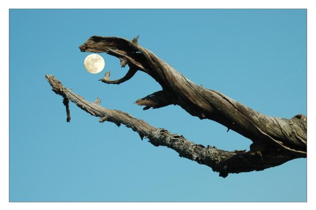 branche mangeuse de lune La_lun10