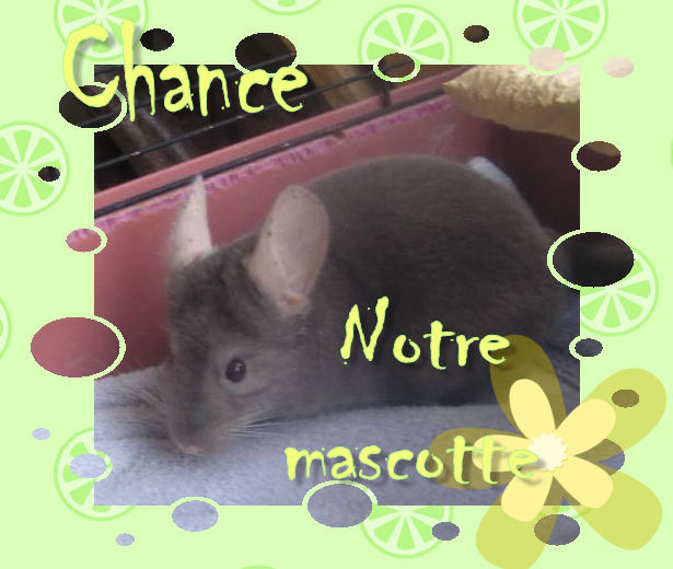 Chance, notre Mascotte - Page 3 Chance13