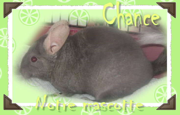 Chance, notre Mascotte - Page 3 Chance14