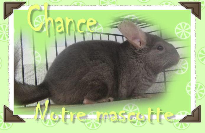 Chance, notre Mascotte - Page 3 Chance16