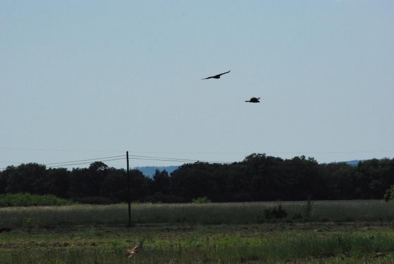 quelques photos d'oiseaux en vol Imgp0620
