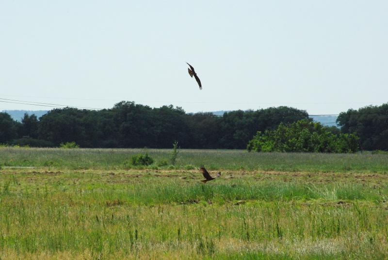 quelques photos d'oiseaux en vol Imgp0621