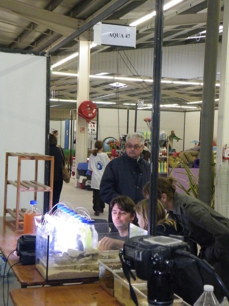 Salon animalier de La Teste Buch 11 et 12 avril 2009 - Page 14 Dscf0911