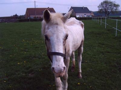 La silhouette du vieux cheval 06050610