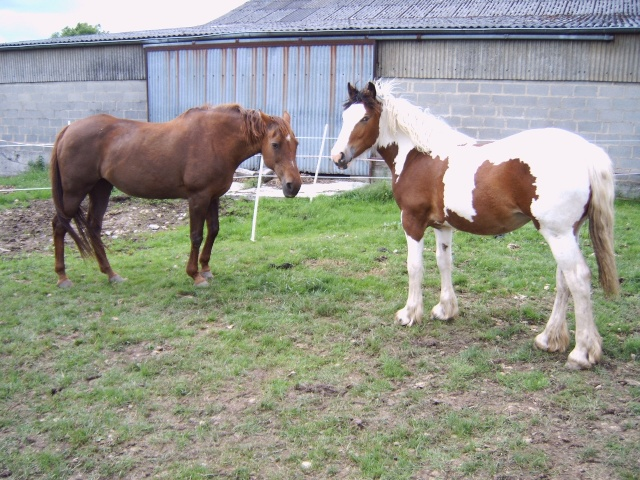 La silhouette du vieux cheval 30050710