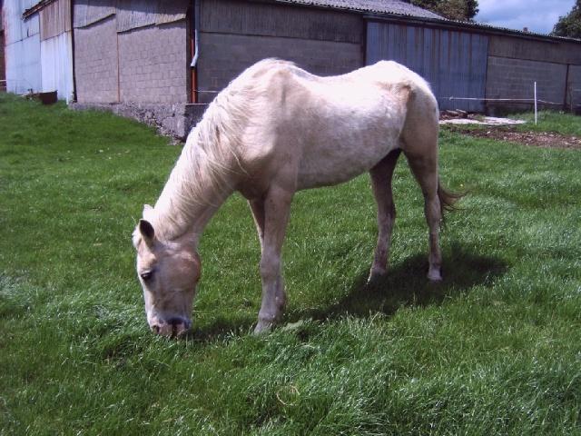 La silhouette du vieux cheval 30050711