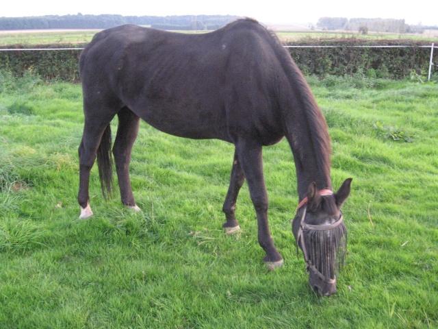 La silhouette du vieux cheval Img_2211