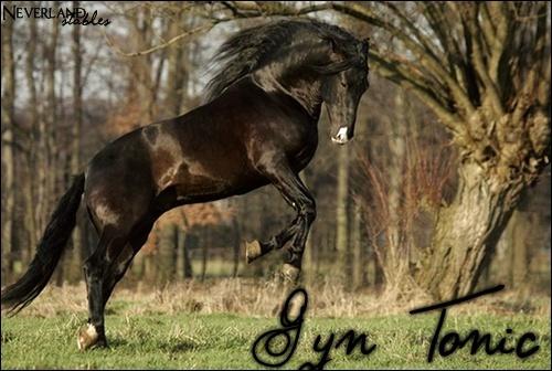[ Gyn Tonic - Hongre - 10 ans ] Gyn_to10