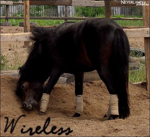 Chevaux de propriétaires [11 chevaux] Wirele10