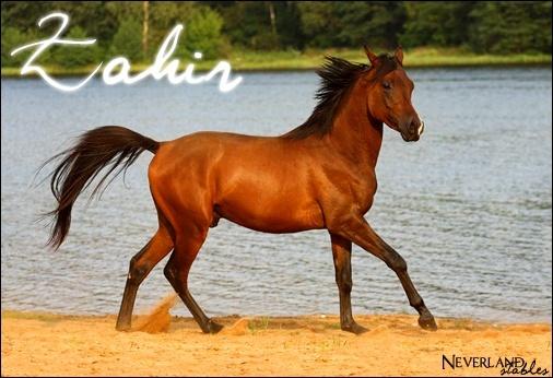[ Zahir - Etalon - 16 ans ] Zahir_11