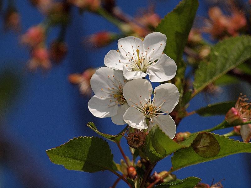 Vos plus belles photos du mois d'avril 2010 P4250310