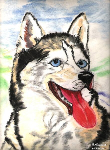 Le husky ( pastel sec) Chien_10
