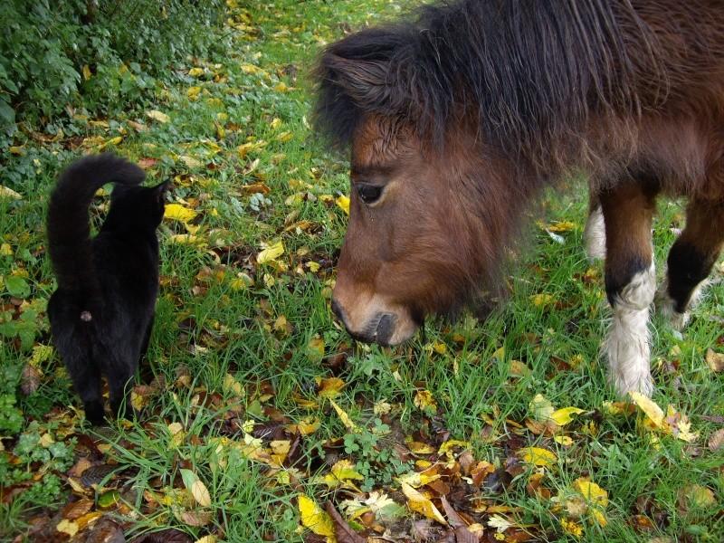 PEPITA (et POLLY) - ONC typées Shetland présumées nées en 2005 - adoptées en novembre 2008 par frenchy71 et Pascale  - Page 3 Imgp1112