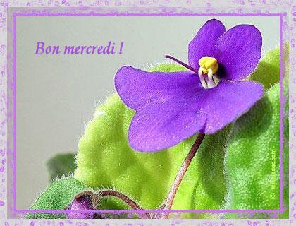 Mercredi 4 février : bonjour tout le monde !! 290up110