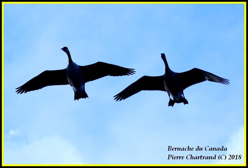 Aujourd'hui a Anjou sur le Lac Bernac10