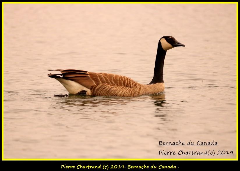 Jeudi 23 Mai Aux Lacs Fauvel , Blainville . Bernac50