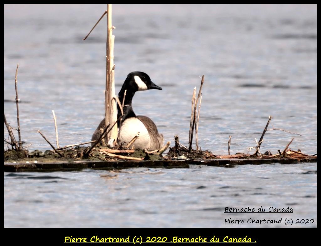 Montéal , Mardi 14 Avril 2020 , Bernac74