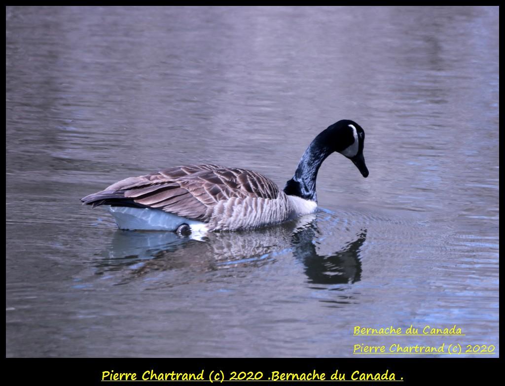 Montréal ,23 Avril 2020 ,Sortie Nord-est . Bernac80