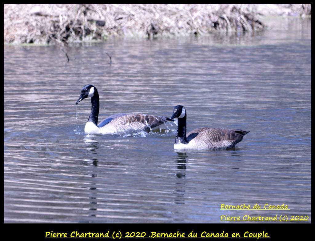 Montréal ,23 Avril 2020 ,Sortie Nord-est . Bernac81