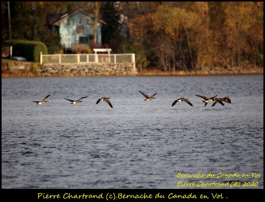 Parc Armand Bombardier . Bernac97