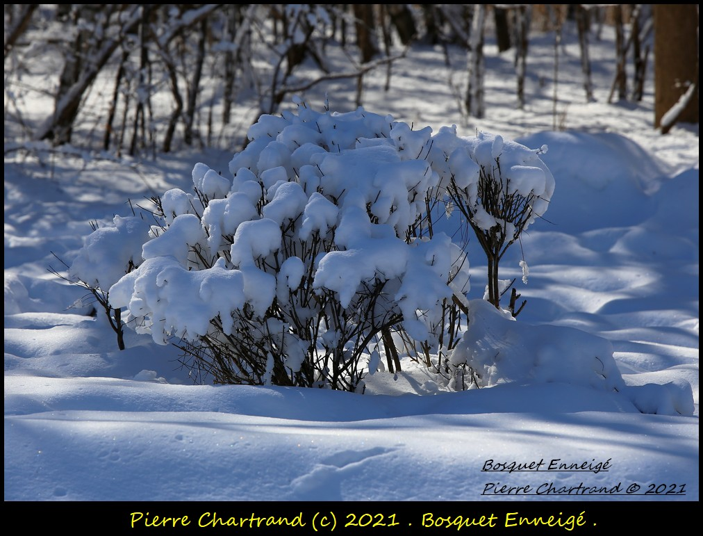 Parc Nature de la Pointe aux Prairies .Secteur Héritage . Bosque10