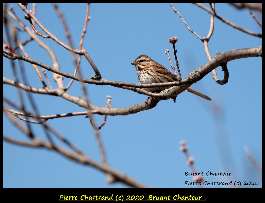 Charlemagne , 20 Avril 2020 . Bruan169