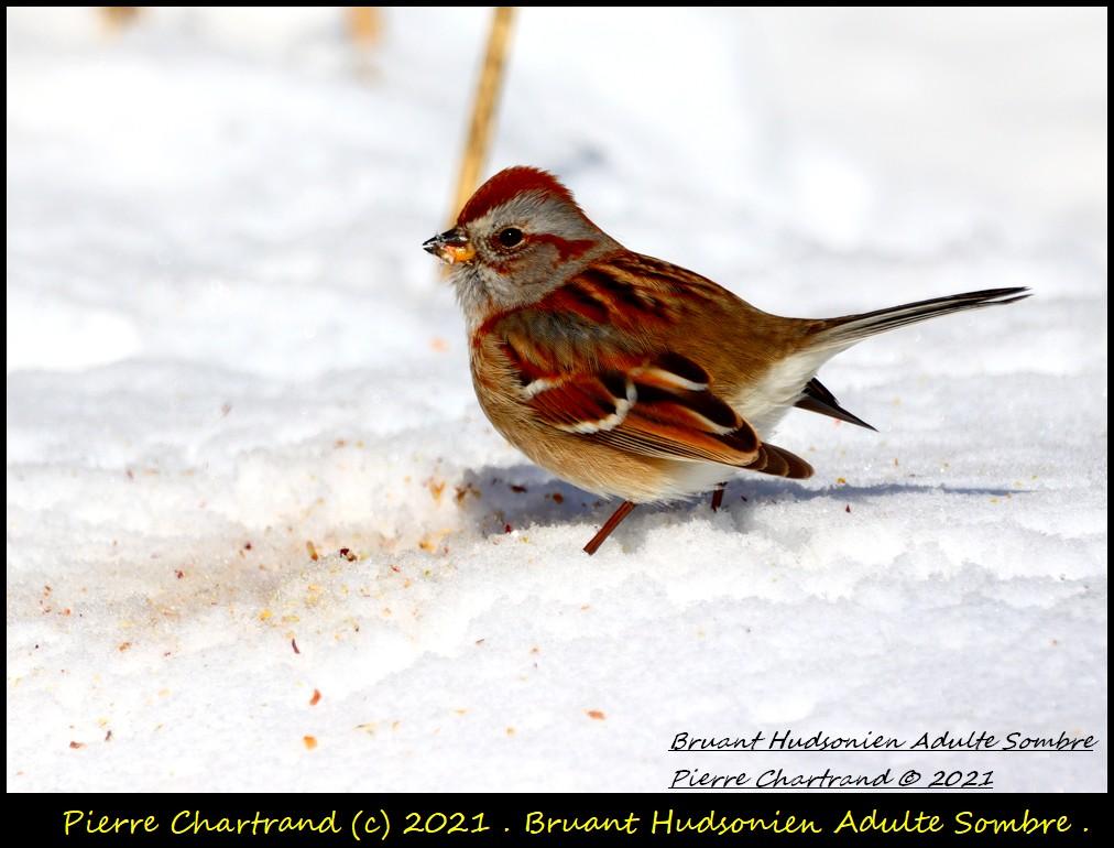 Parc Nature de la Pointe aux Prairies .Secteur Héritage . Bruan245