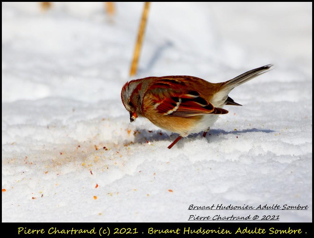 Parc Nature de la Pointe aux Prairies .Secteur Héritage . Bruan246