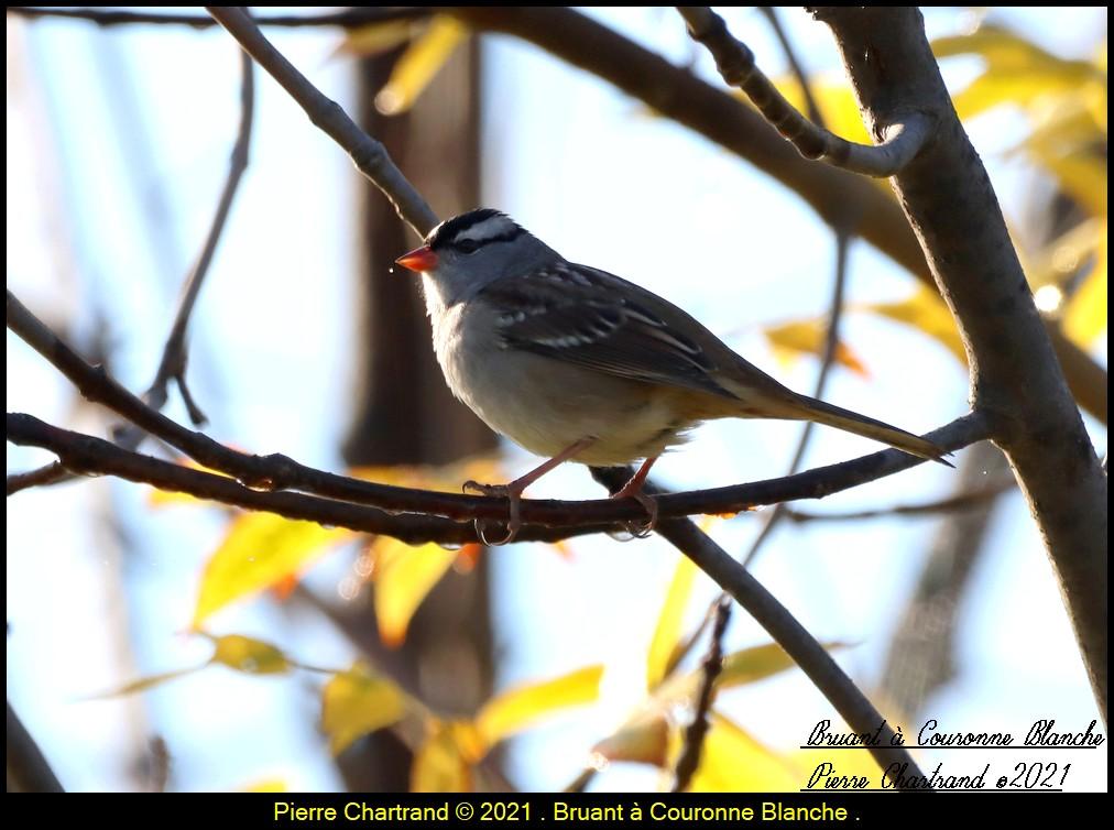 Parc Nature de la Pointe aux Prairies .Section Marais. Bruan313