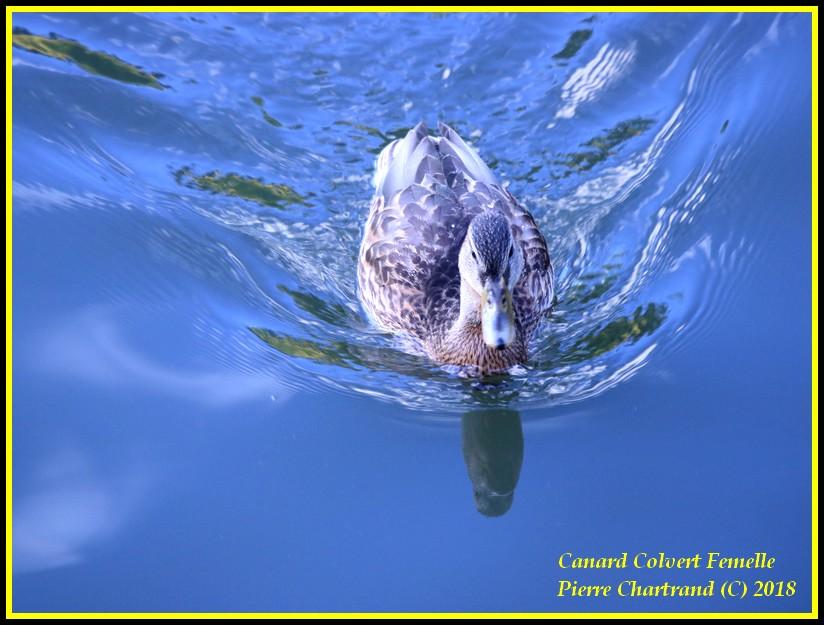 Aujourd'hui a Anjou sur le Lac Canard31