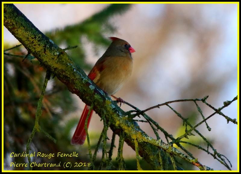 Parc Nature de l'Ile de La Visitation Cardin24