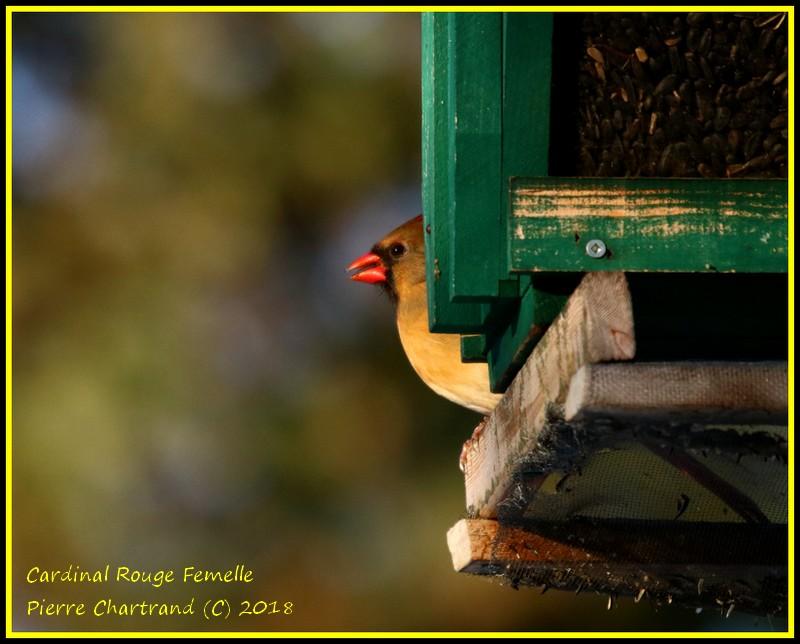 Parc Nature de l'Ile de La Visitation Cardin26