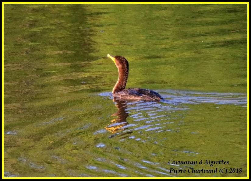Aujourd'hui a Anjou sur le Lac Cormor17