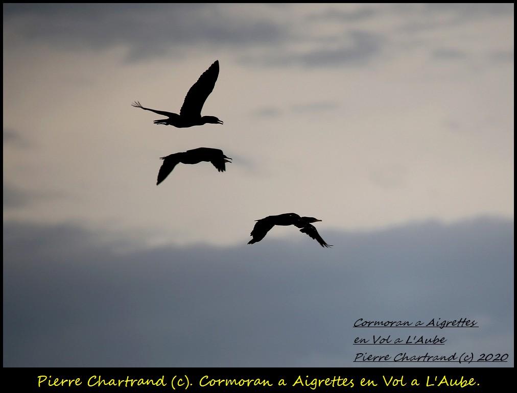 Charlemagne , 29 Juillet 2020 . Cormor33