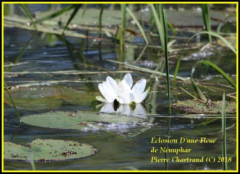 Hier dans Lanaudière Fleur_11