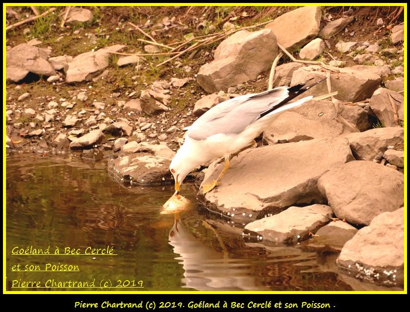 Dimanche 26 Mai ,Anjou sur le Lac , Anjou . Gozola59