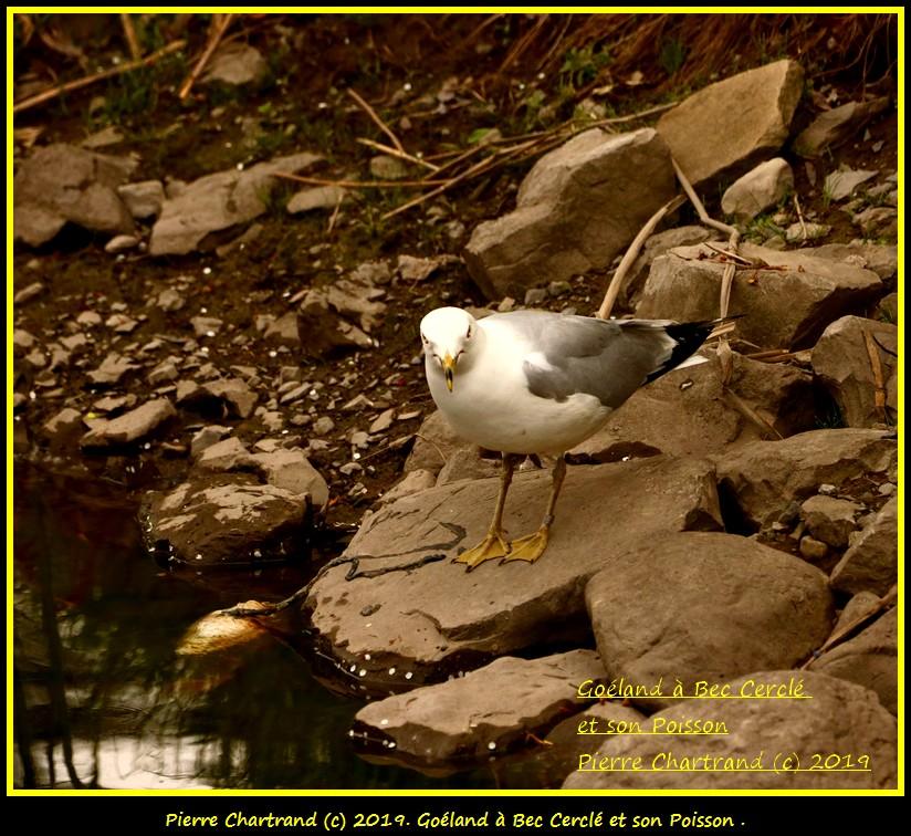 Dimanche 26 Mai ,Anjou sur le Lac , Anjou . Gozola60