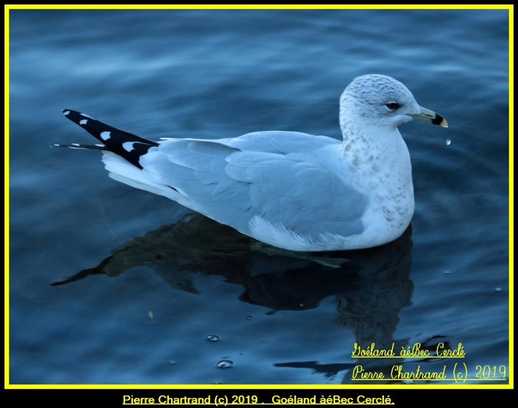 26 Octobre Autour du Bassin de Chambly . Gozola92