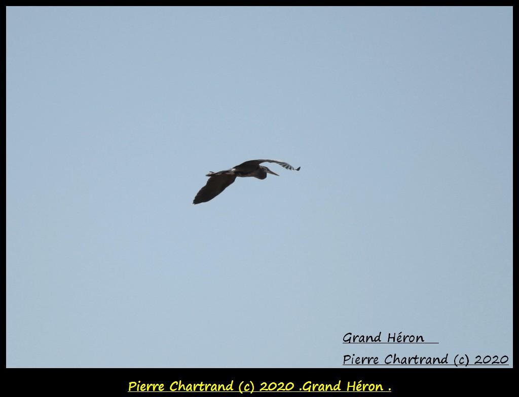 Charlemagne , 20 Avril 2020 . Grand_59