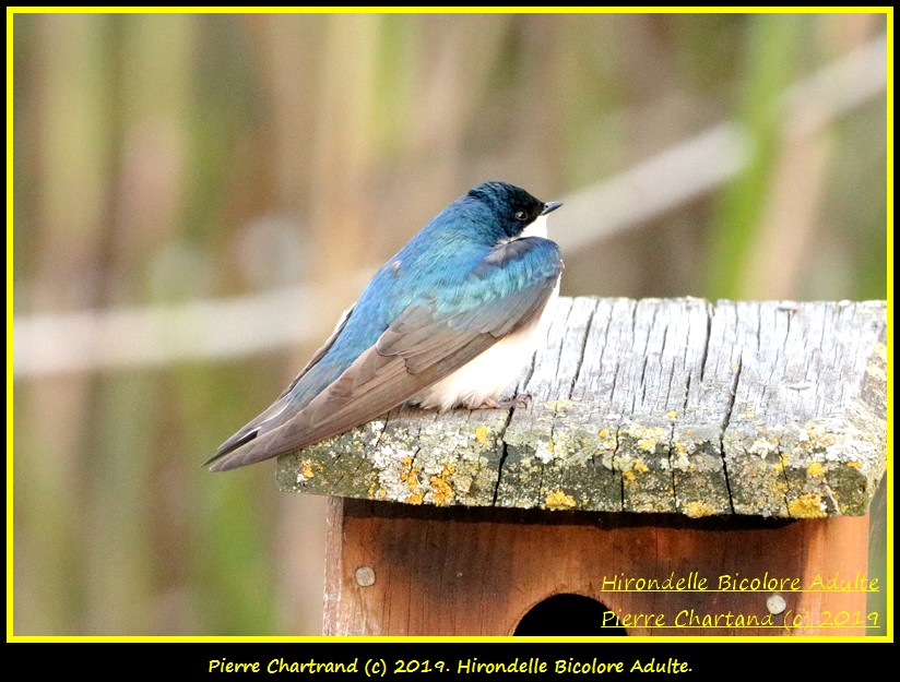 Jeudi 06 Juin ,Une Ptite vite au J.B. Hirond33
