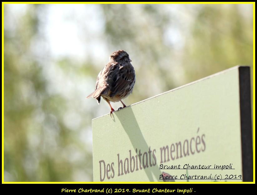 Mercredi , 22 Mai Jardin Botanique . M6_bru10