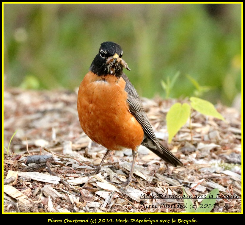 Jeudi 06 Juin ,Une Ptite vite au J.B. Merle_68