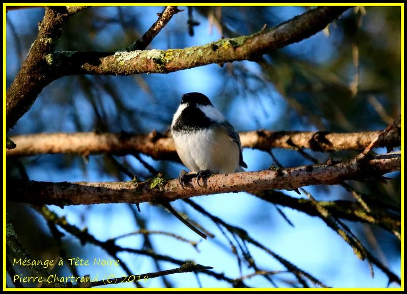Parc Nature de l'Ile de La Visitation Mzosan16