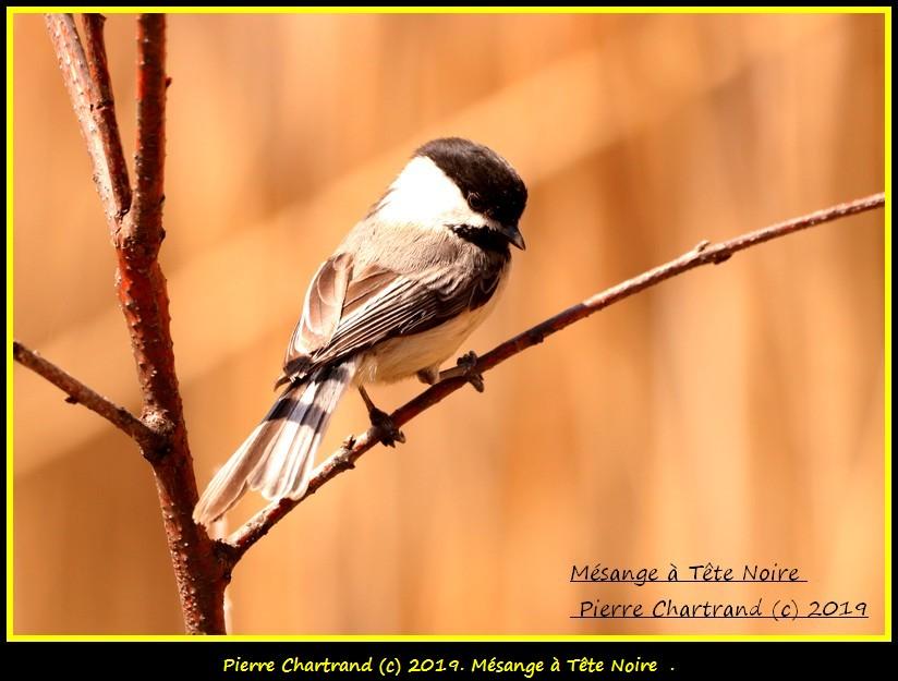 Lundi , 6 Mai ,Parc Nature . Mzosan35