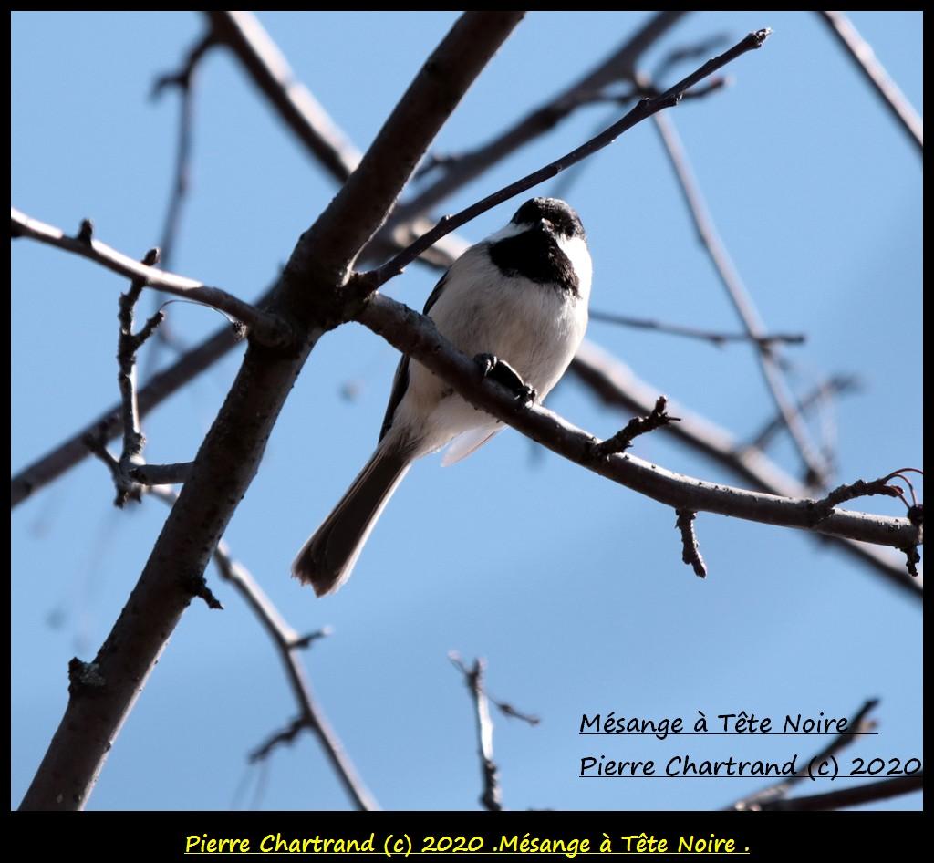 Longueuil , 31 Mars 2020 é Mzosan54