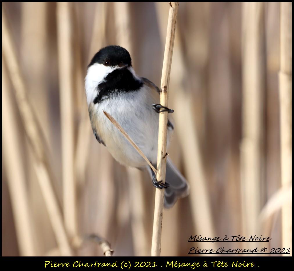 Parc Nature de la Pointe aux Prairies .Secteur Héritage . Mzosan74