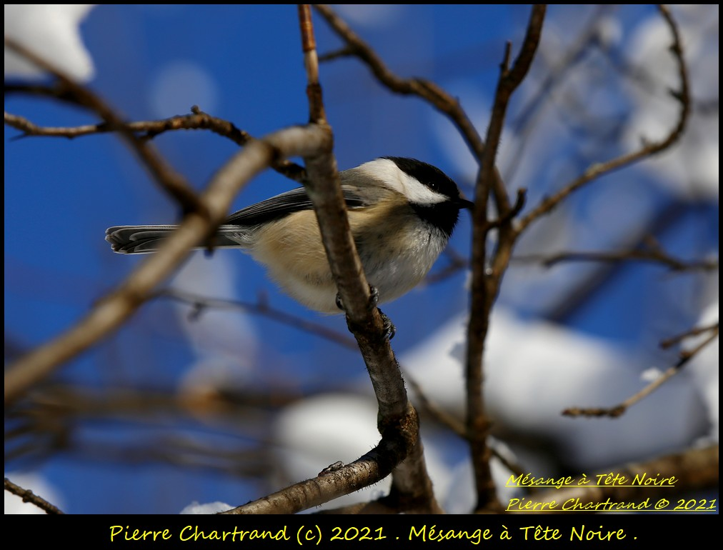 Parc Nature de la Pointe aux Prairies .Secteur Héritage . Mzosan75