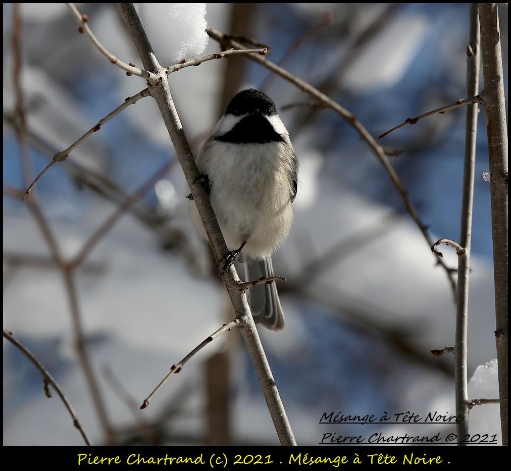 Parc Nature de la Pointe aux Prairies .Secteur Héritage . Mzosan76